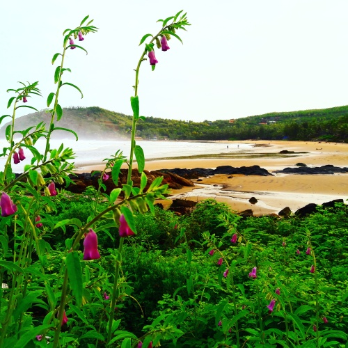 Morning at Kudle beach