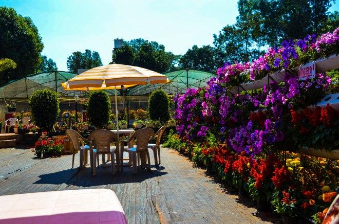 Kingberry Wineyard