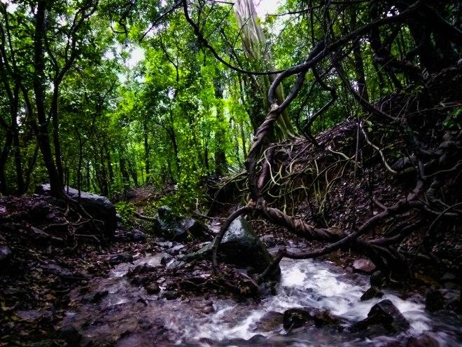 marshy land, ganesh ghat