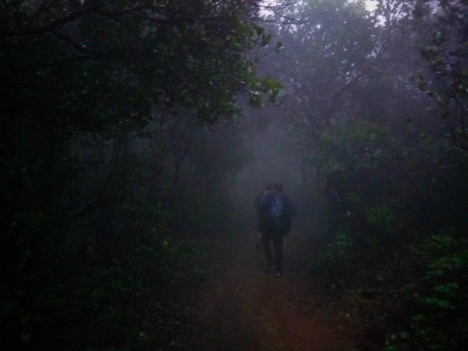 dense forest of Bhimashankar