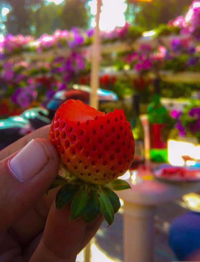 Strawberries at Kingberry