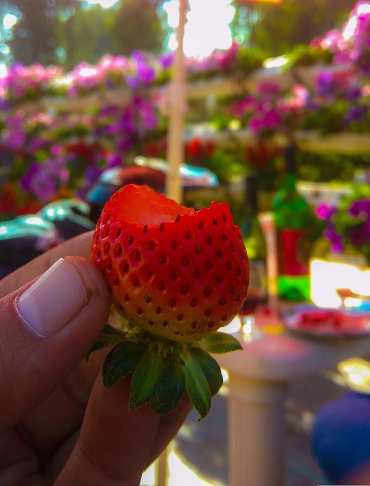 Strawberries at Kingberry