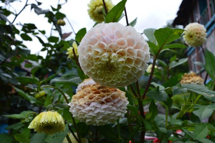 Flowers in Kalga