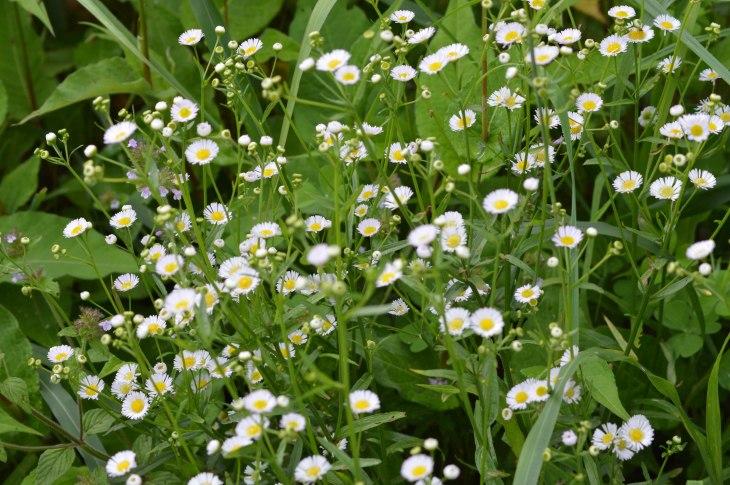 Land of flowers- Kalga