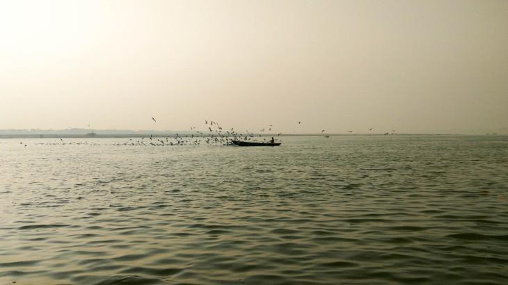 Siberian cranes- Varanasi