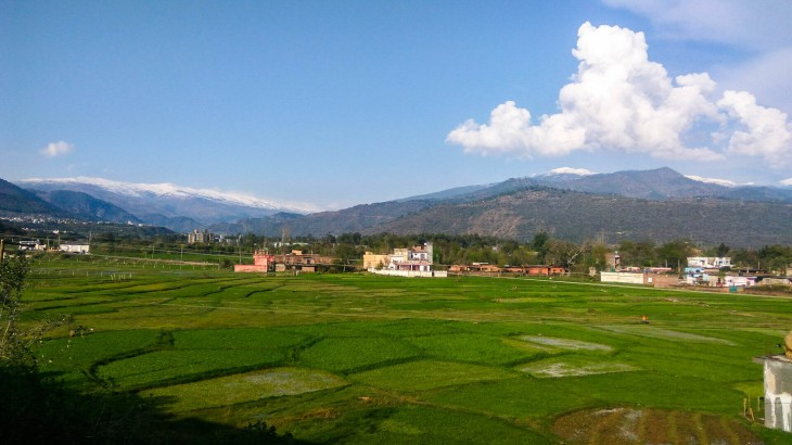 Rice fields of Jammu