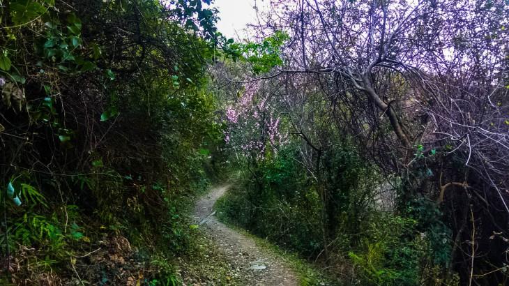 trek to sui mata temple