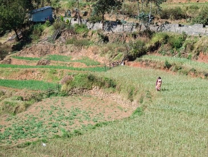 Farms of mannavanur