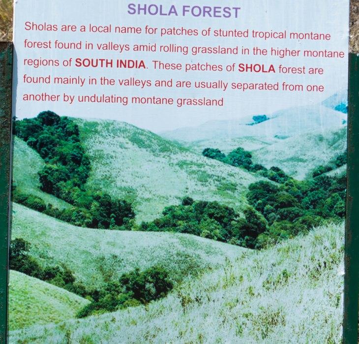 Shola forest- Mannavanur